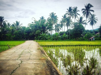 rice paddies and coconut palms while scooting round Mae Sariang
